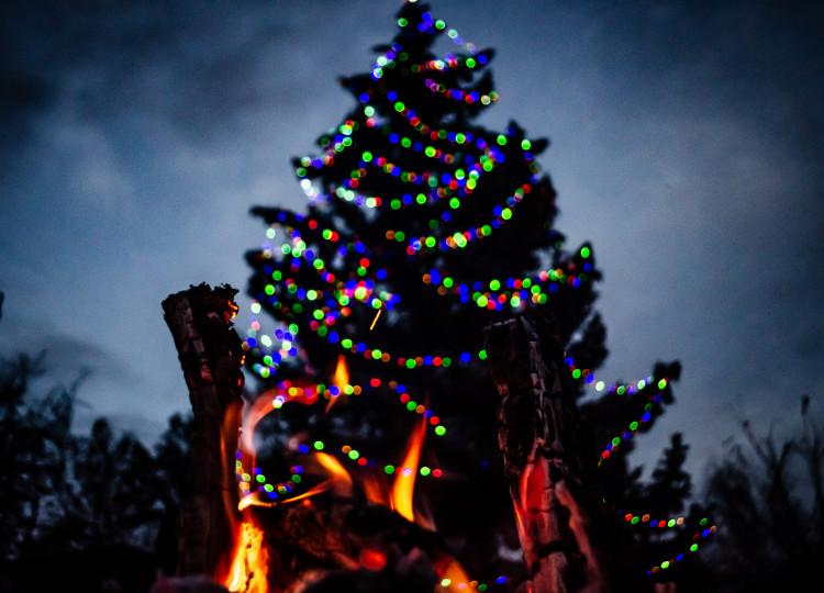 Rozsvícení vánočního stromečku Agrozet